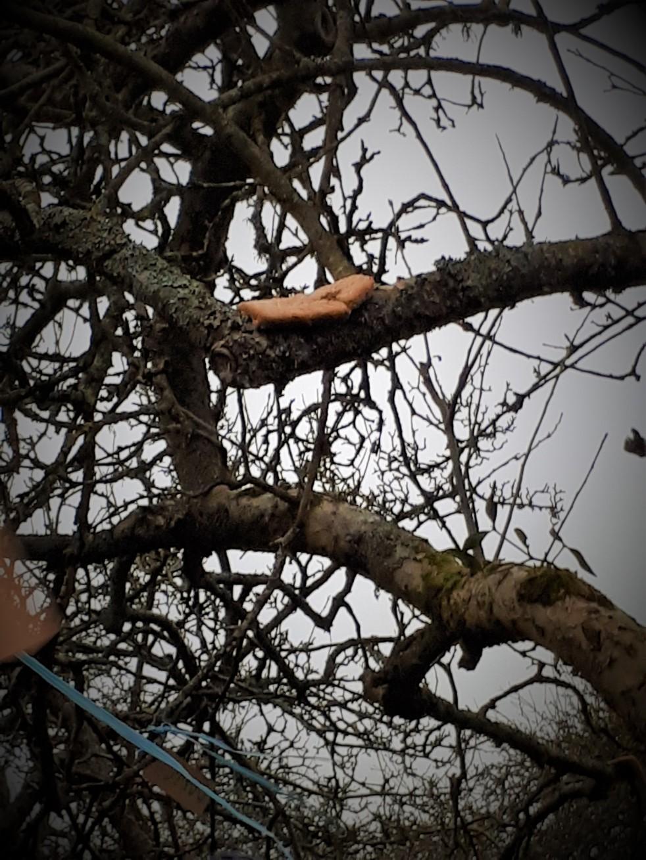 toast on tree